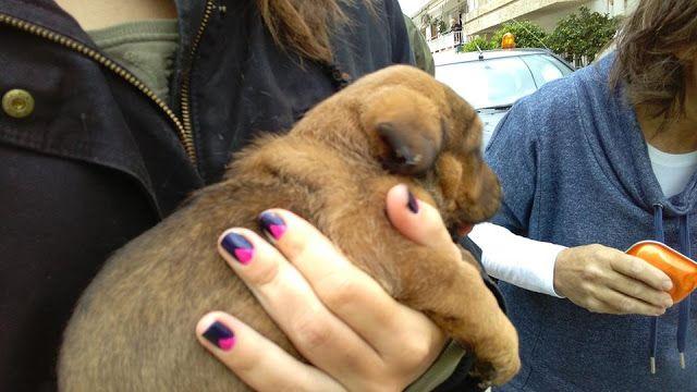 Λουτράκι: Έσωσαν το κουτάβι που ήταν εγκλωβισμένο μέσα σε φρεάτιο επί ώρες (photos)