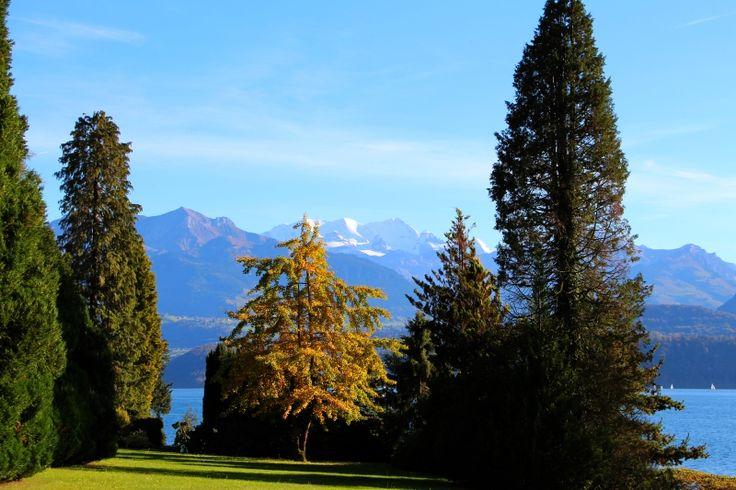 Park Schloss Oberhofen / Thunersee