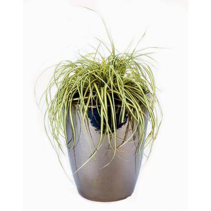 Mawes Garden Planter - 29cm