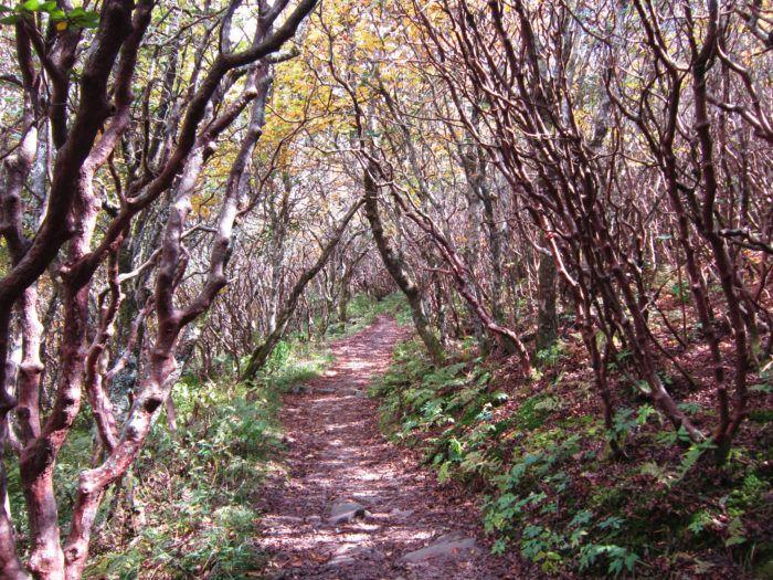 Travel   North Carolina   Attractions   Things To Do   Hiking   Waterfalls   Scenic   Blue Ridge