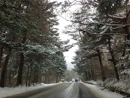겨울을 간직한 숲, 오대산 가는 길, 2013-04-07