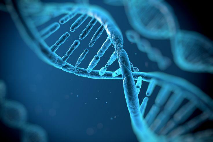 Descubren cuáles son los genes que dan forma a la cara
