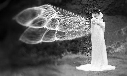"""the entomologist"" by aliza razell"