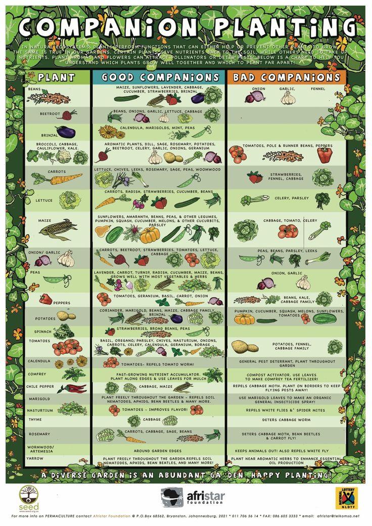 Les plantes à associer ou ne pas associer au jardin - Good and bad companions in the vegetal garden