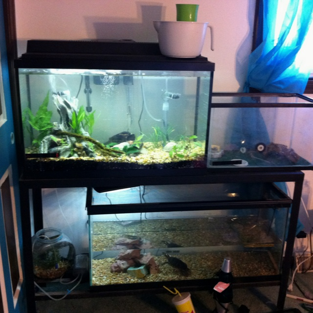 My new setup... 55 gallon stand, 29 gallon aquarium up top, along with my lizard beside it... Then my beta bowl on the bottom left corner next to my 40 gallon turtle tank... Pretty impressive I think... But having that instead of my vanity makes my room look... Wider :D