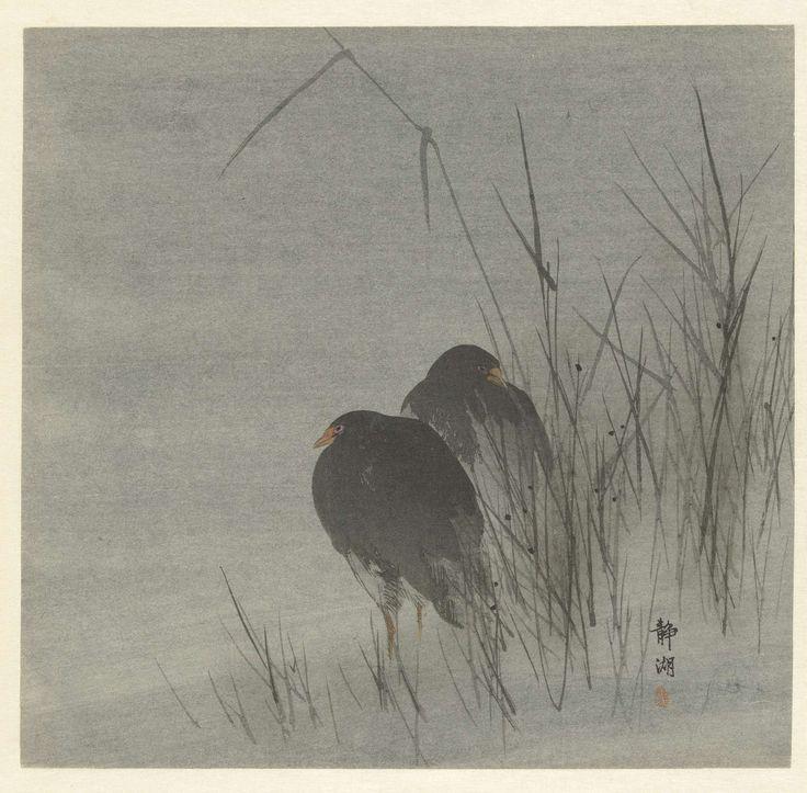 Twee meerkoeten tussen riet, Okuhara Seiko, 1900 - 1910