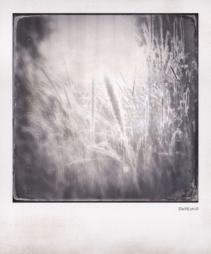 LE LABBRA Soffro.  E quando credo di stringere la sensazione che ha un quaderno con un polso sopra, respiro, per ora, compatto, la sintonia di un campo di grano si vede dalle spighe, una danza attraversata dal vento, come un doloroso sfiorare di labbra, ma, non esistono giochi felici.  Per ora.   http://paralleluniverseinpolaroid.wordpress.com