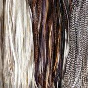 Trendy natuurlijke rooster feather hair extensions (hanenveren)  lengte van de veer: tot 35 cm 3 tot 7 mm breed  Leverbaar in 4 varianten: natureltinten licht, natureltinten donker, bruin/zwart (grizzly) en zwart/wit (grizzly)  Te bestellen via http://www.blitzzzz.nl/products-page/veren-haar-extensions/rf006-rooster-feather-hair-extensions/