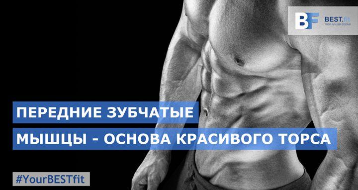 ПЕРЕДНИЕ ЗУБЧАТЫЕ МЫШЦЫ  Чтобы накачать красивый торс недостаточно выполнять только упражнения по тренировке грудных широчайших мышц и мышц пресса. Подчеркнуть эти группы их эстетическую красоту можно тренируя зубчатые мышцы. Они являются маленькой но очень важной деталью в общей картине тренированного тела.  Для того чтобы дать косвенную нагрузку зубчатым мышцам необходимо выполнять упражнения по тренировке спины груди и плеч. Растягивание и сжатие грудной клетки а также приведение и…