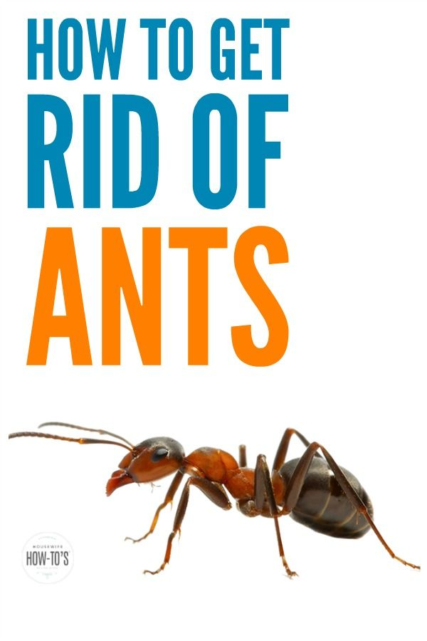 How To Find Where Ants Are Getting Into House