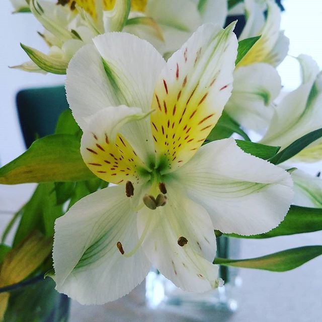 #flowers #flowerprower #nature #blumen #ilovenature #beautiful