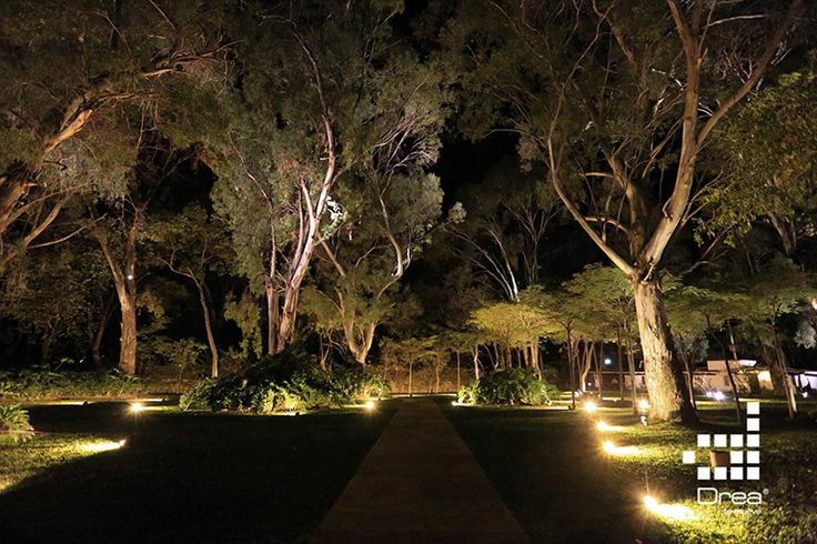 La iluminaci n arquitect nica de los arboles de la casona for Iluminacion arboles jardin