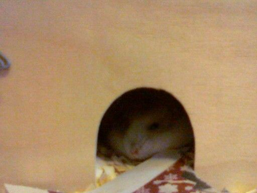 My pawesome hamster Nemo is sleeping... Aww so cute!