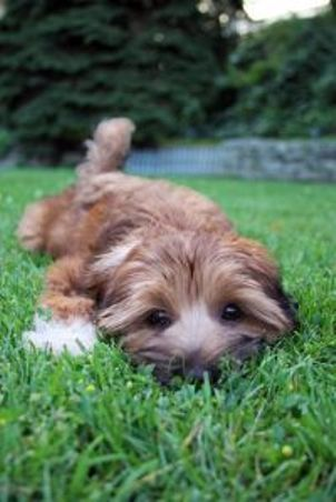 A Fast Way to Potty Train Your Puppy  It is always up to the person to pay attention.  Praise is what gets the goal.