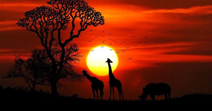SKYSAFARI NA SAVANA QUENIANA: Observe de perto os verdadeiros reis africanos: os animais! Aventuras ao ar livre, porém, com a dose necessária de conforto para aproveitar cada segundo: locomova-se de avião particular entre seus destinos. Você vai conhecer a história do Quênia através de sua flora, fauna e de seus ferozes animais.