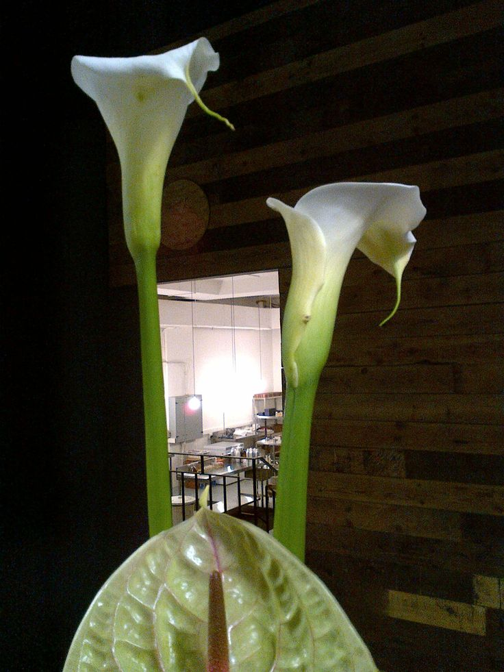 A sneak view to the FP Factory where the magic of beauty happens. Lilies know it all!
