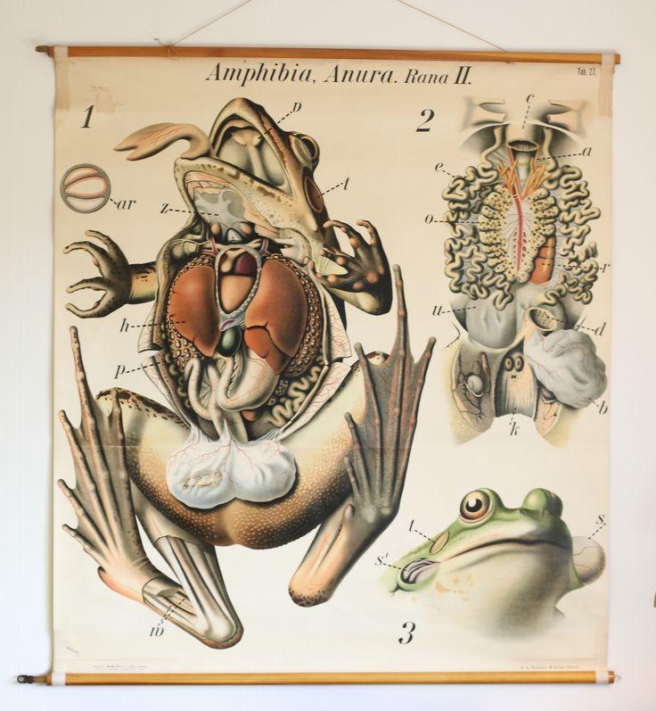 165 best Zoology images on Pinterest | Botany, Planks and Vintage birds