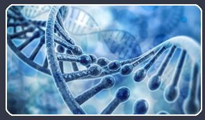 DNA Detectives | About The Company
