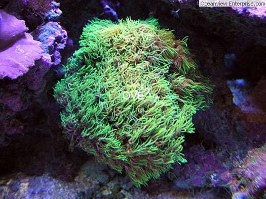 water micro reef tank on pinterest starfish green and buy 1 get 1