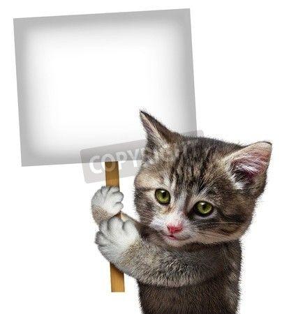 笑顔幸せな式をサポートし、分離の白い背景の上のペットの世話に係るメッセージを伝えることで猫かわいい子猫として空白のカードの記号を持った猫