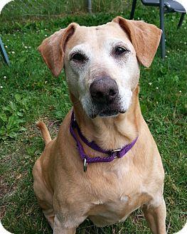 Leola - Permanent Foster - Save a Pet