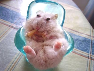 A happy chubby dwarf