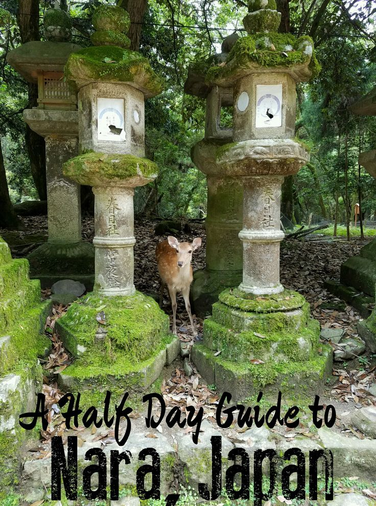 The Magical City of Nara, Japan- A Half Day Guide! http://tracking.publicidees.com/clic.php?progid=378&partid=48172&dpl=http%3A%2F%2Fwww.ecotour.com%2Fvoyage%2Fjapon-p27