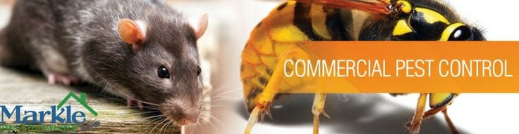 Are you searching commercial pest control services in Dallas or in Plano? Contact Markle Termite & Pest Management and make your home or business pest free.