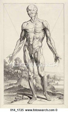 28 Best Anatomy Images On Pinterest Human Anatomy Anatomy Drawing
