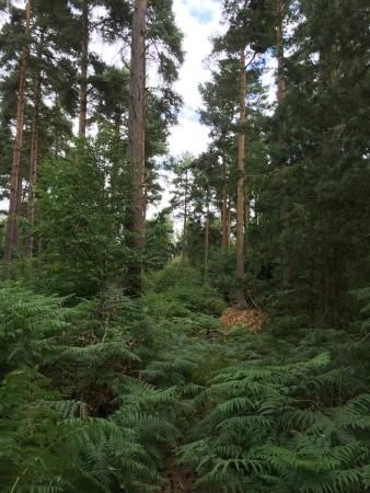 Photo of Thetford Forest Park