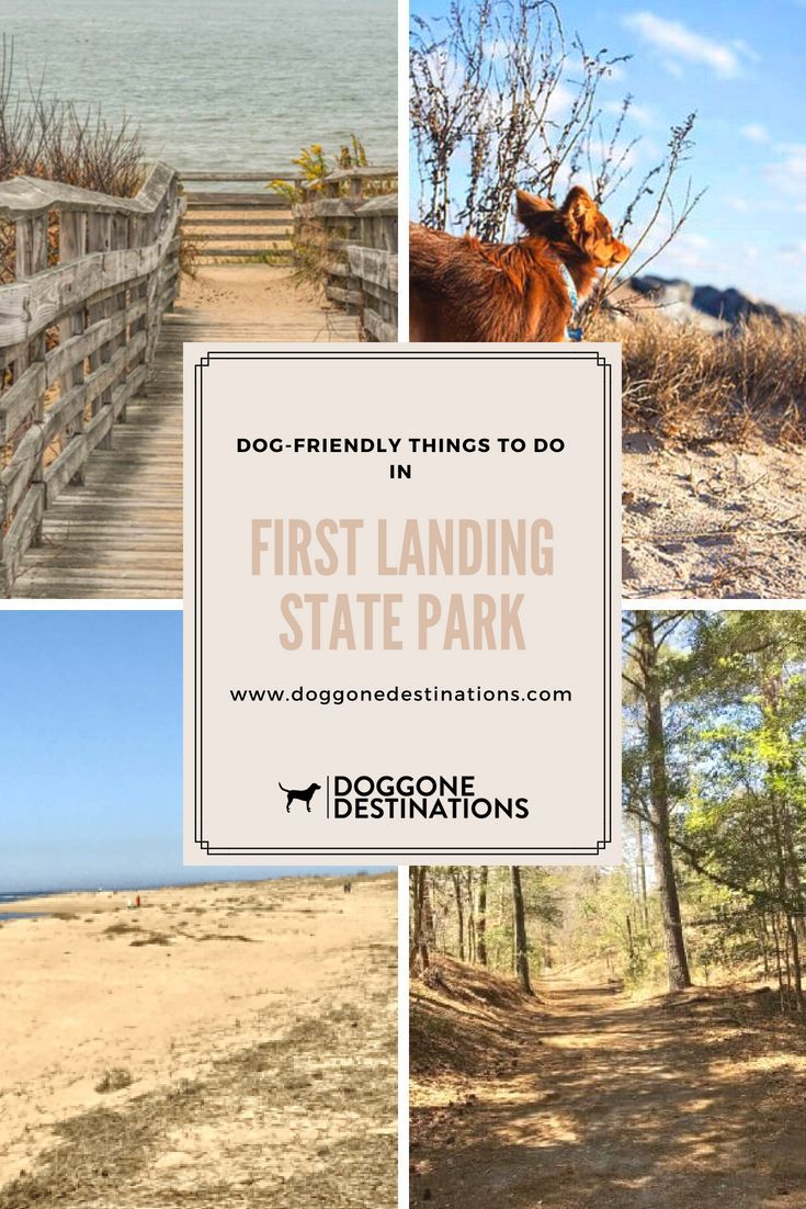 Why First Landing State Park Is One Of Best Pet Friendly Places In Virginia Best Island Vacation Dog Friendly Beach Dog Friendly Vacation