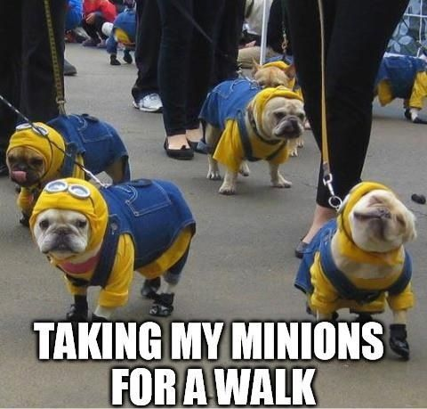 I need minion costumes for my dogs.Pugs Minions, Puppies, Funny Dogs, French Bulldogs, Halloween Costumes, Minions Dogs, Pets, Bulldogs Minions, Animal