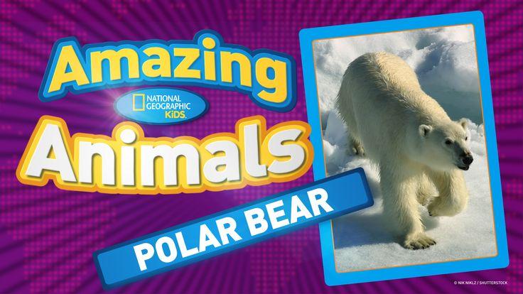 Polar Bear Games on Pp Is For Polar Bear Worksheet