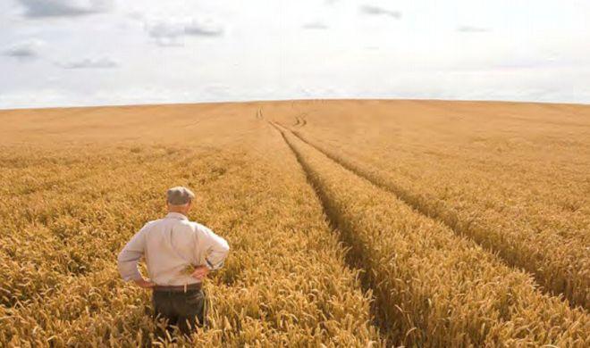 Agricoltura sostenibile, siglato accordo tra Barilla e Italia Zuccheri