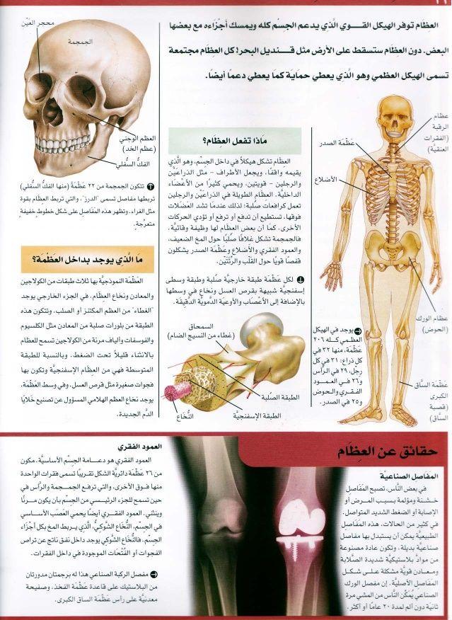 موسوعة سؤال وجواب جسم الانسان Movie Posters Movies Poster