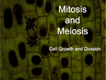 Mitosis and Meiosis (Cell Growth and Division) Powerpoint and Notes. It consists of 55 slides that are colorful, informative and visually stimulating.