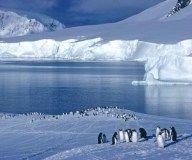 Descubren en la Antártida dos nuevas especies de gusano comedor de huesos