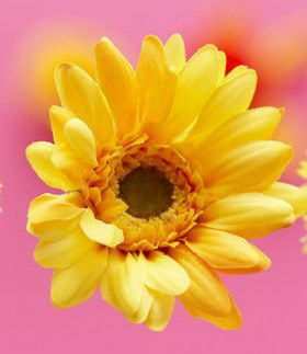 Download Free Lovely Flower Mobile Wallpaper Contributed By Geniuslaiba Is Uploaded