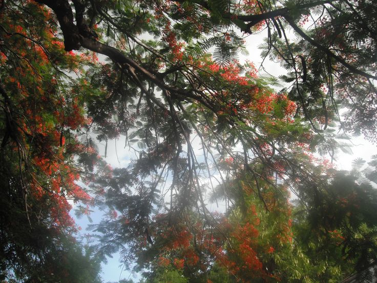 Hope Gardens, Kingston, Jamaica