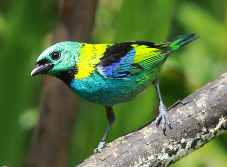17 Best Images About Birds And Her Beautiful Colors On
