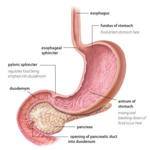 Natural Cures For Gastroparesis Treatment