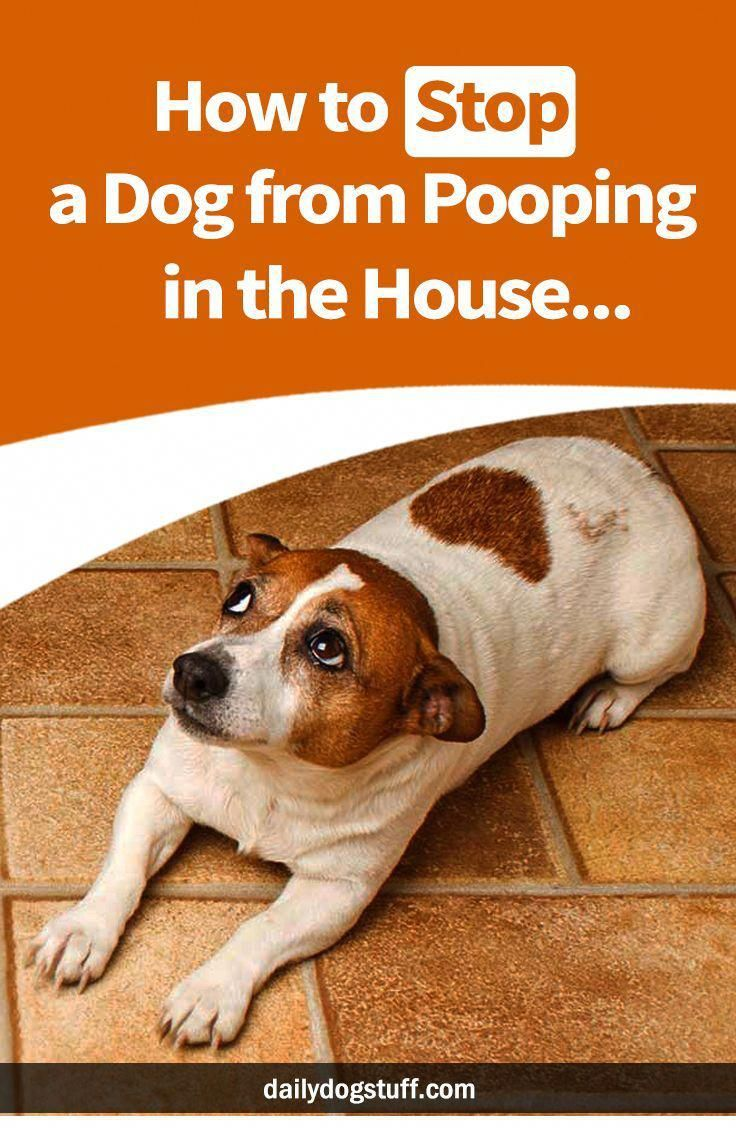 How To Stop A Dog From Pooping In The House Training Your Dog