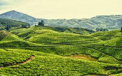 Tea fields in Kerala, IndiaNature, Teas Plantations, Beautiful Places, Wallpapers, India, Kerala, Travel, Design, Fields