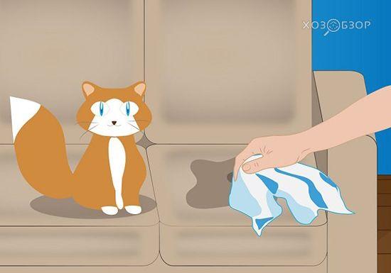 выведение кошачьей мочи с дивана