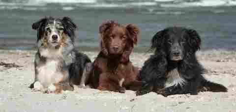 Urlaub mit 3 Hunden? Kein Problem! Hier finden Sie über 250 Feriendomizile europaweit, in denen Sie mit 3 Hunden Urlaub machen können: Ferienwohnungen: Ferienhäuser: Hotels: Pensionen: Wohnmobilvermietung: (1487)