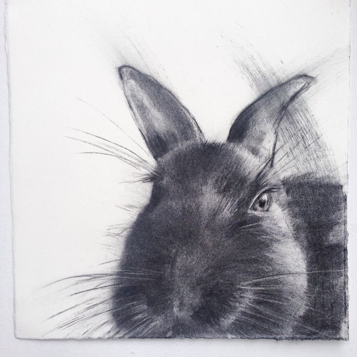 'Rocky the Wandering Easter Bunny' wishes you a safe and happy Easter. Original Charcoal Sketch on Paper. Charles Hannah Art & Design