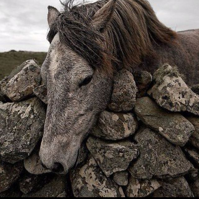 This photo touched my heart.  It seems to me that this sweet horse is lonely and just begging to be petted.