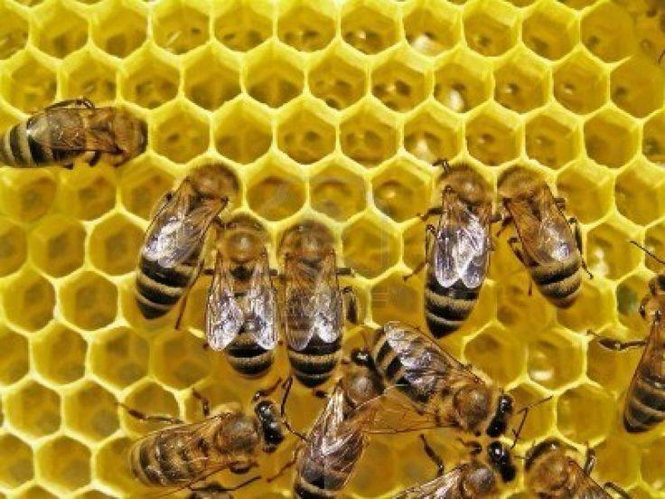 La ruche qui dit oui