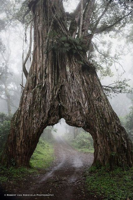 'Into the Mystic' ~ Arusha National Park, Tanzania