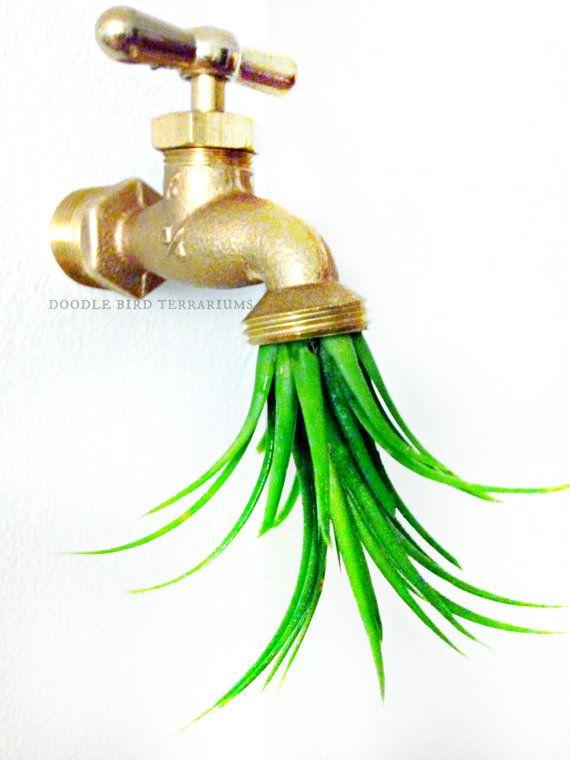 Water Spout Tillandsia Air Plant Holder